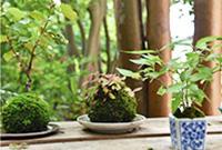 苗木の配布・盆栽コーナー